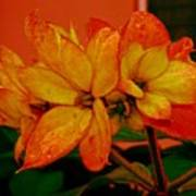Lovely Flowers1 Art Print