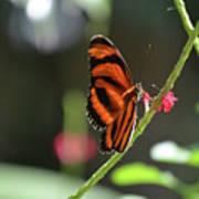Lovely Orange Oak Tiger In The Spring Art Print