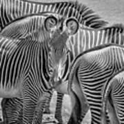 Lovely Stripes  7589bw Art Print