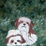 Loving Shih Tzu Art Print