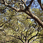 Low Angle View Of Trees In A Park Art Print