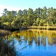 Lower Suwannee National Wildlife Refuge Ti Art Print