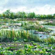Loxahatchee Marsh 1 Peter 5 Art Print