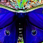 Luna Moth Uv Pano Art Print