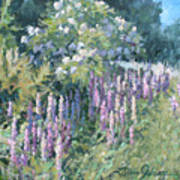 Lupine On Parade Print by L Diane Johnson