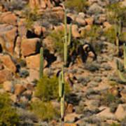 Lush Arizona Desert Landscape Art Print