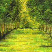 Tropical Trees Theosophical Society Chennai Art Print