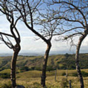 Lush Land Leafless Trees Iv Art Print