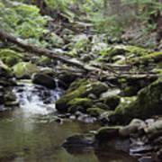 Lush Stream And Canopy Foliage Art Print