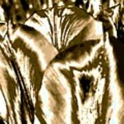 Lustrous Golden Tulip Art Print