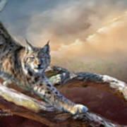 Lynx Spirit Art Print