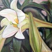 Lys Art Print