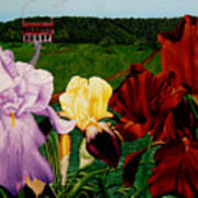 M S  O S Irises 2  Art Print