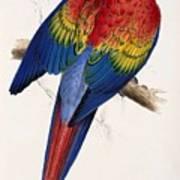 Macaw By_edward_lear Art Print