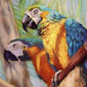 Macaws In The Sunshine Art Print