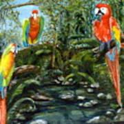 Macaws Art Print