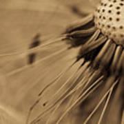 Macro - Dandelion Art Print
