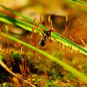 Macro Of An Ant Art Print