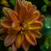 Macro Of Dahlia Flower Art Print