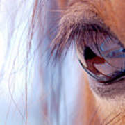 Macro Of Horse Eye Art Print