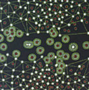 Macrophage Art Print