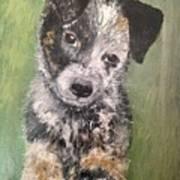 Macy As A Puppy Art Print