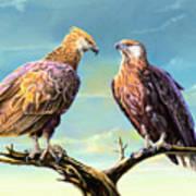 Madagascar Fish Eagle  Art Print