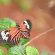 Madiera Butterflies Art Print
