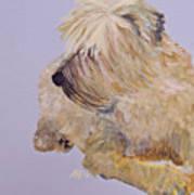 Madigan Wheaten Terrier Art Print