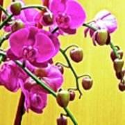 Magenta Orchid 3 Art Print