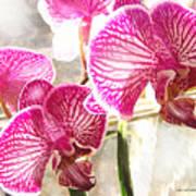 Magenta Orchids Art Print