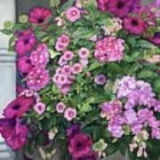 Magenta Petunias Art Print