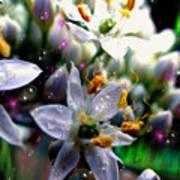 Magic Blossoms Art Print