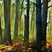 Magic Forest Art Print by Helen Carson
