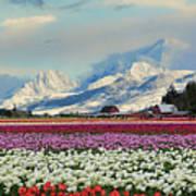 Magic Landscape 1 - Tulips Art Print