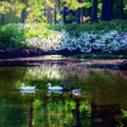 Magical Beauty At The Azalea Pond Art Print
