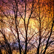Magical Colorful Sunset Tree Silhouette Art Print