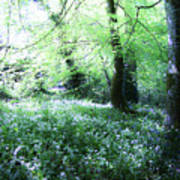 Magical Forest At Blarney Castle Ireland Art Print