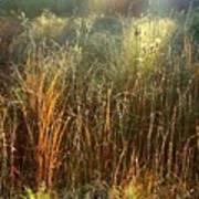 Magical Light On The Marsh Art Print