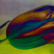Magical Tulip Art Print