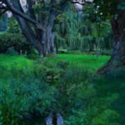 Magical Woodland Glade Art Print