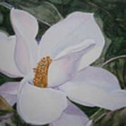 Magnificent Magnolia Art Print
