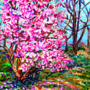Magnolia - Early Spring Art Print