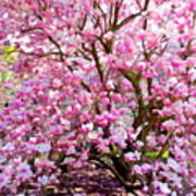 Magnolia Beauty #14 Art Print