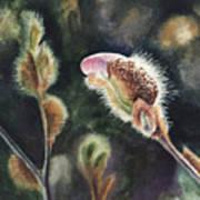 Magnolia Bud By Irina Sztukowski  Art Print