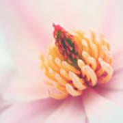 Magnolia Crown Art Print
