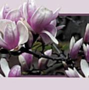 Magnolia Fantasy II Art Print