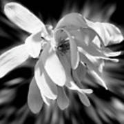 Magnolia Flower In Black And White Art Print