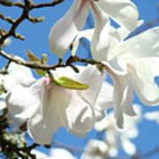 Magnolia Flowers Floral Art Spring Flowering Tree Baslee Troutman Art Print