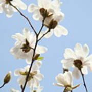 Magnolia Flowers White Magnolia Tree Flowers Art Spring Baslee Troutman Art Print